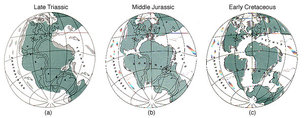 Dinosaurs 2 biologywriter the continents were not in their present positions when dinosaurs lived in the triassic a all of the continents were connected into a huge gumiabroncs Gallery